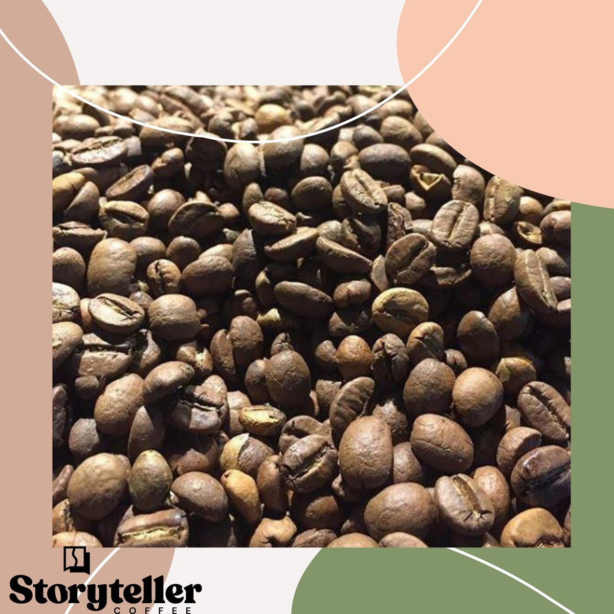 Know the story behind every bean. . Check our webstore and find out the story behind every bean we have!  #coffee #coffeelover #coffeeaddict #drinkstorytellercoffee #coffeebean #floridacoffee #coffeeroasterpic.twitter.com/3N2cvYLkv9