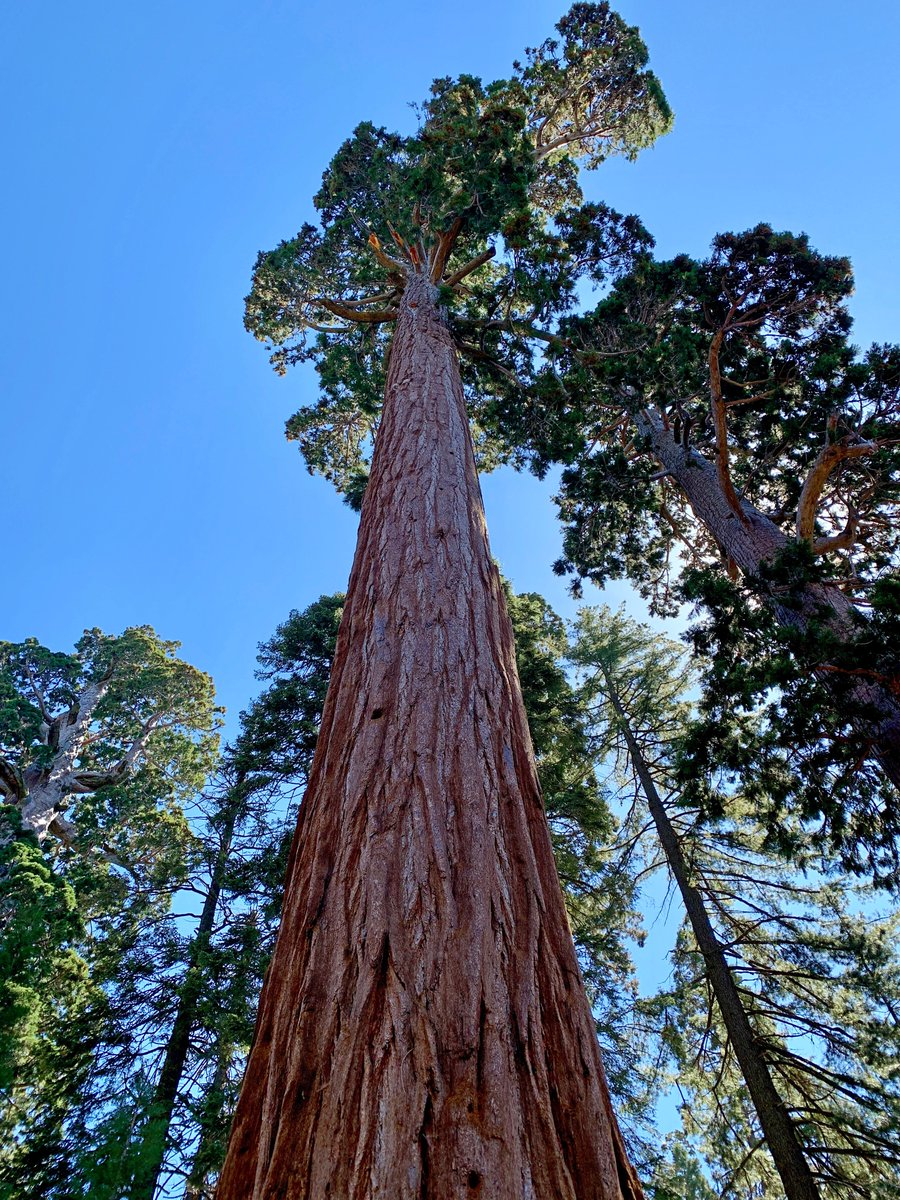 NEW THIS WEEK: After 7 straight days of baseball on our 2019 California Baseball Road Trip, we spent the first of two off days in beautiful Kings Canyon National Park, home of the giant sequoia. mappingthepath.com/day-8-kings-ca… #travelblog #travel #travelphotography