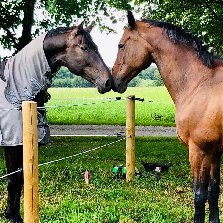 Happy to have my two horses back together again! #horselover https://t.co/7atWpw4AnA