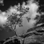 Image for the Tweet beginning: Tree of the Day from