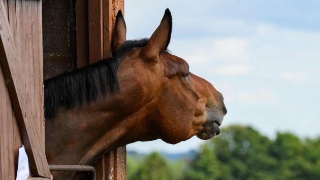 Calls to rethink turnout measures for horses to benefit their welfare *H&H Plus https://t.co/9DlYS3bdww https://t.co/Sk4x0ahcGj