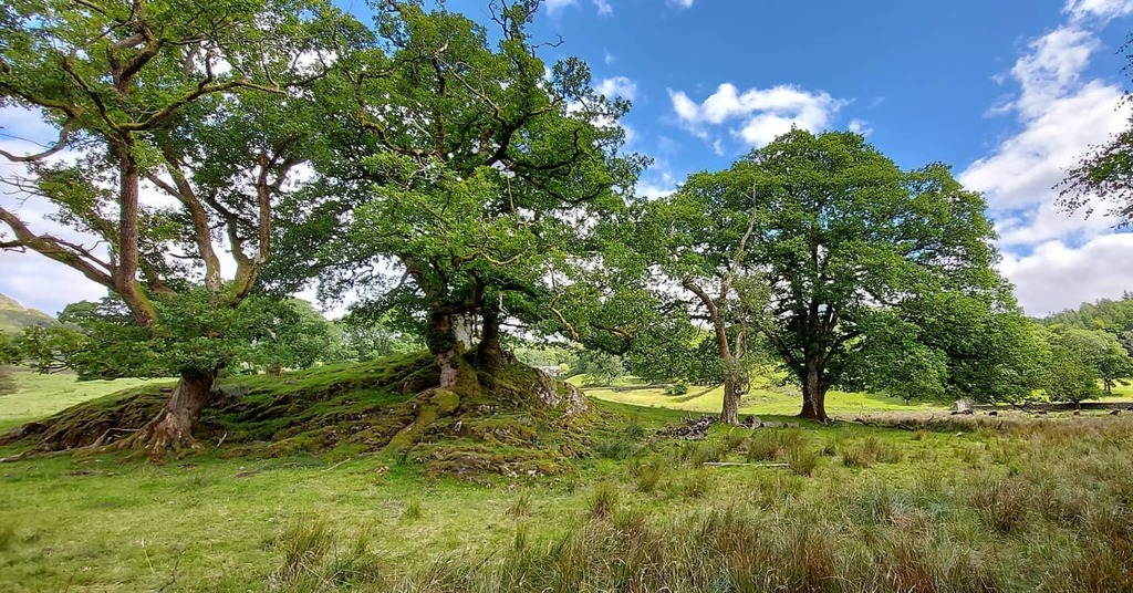 test Twitter Media - Is it Middle Earth? No, it's the Lake District.  . #lakedistrict #trees #landscape #ancient #natural #nofilter #sunnyday #meadow #england #unitedkingdom https://t.co/3khgXX9zGd https://t.co/54b3wm1Ts0