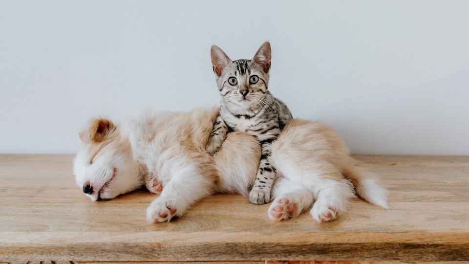 Los animales nos cuidan del coronavirus redpres.com/t36424-los-ani…
