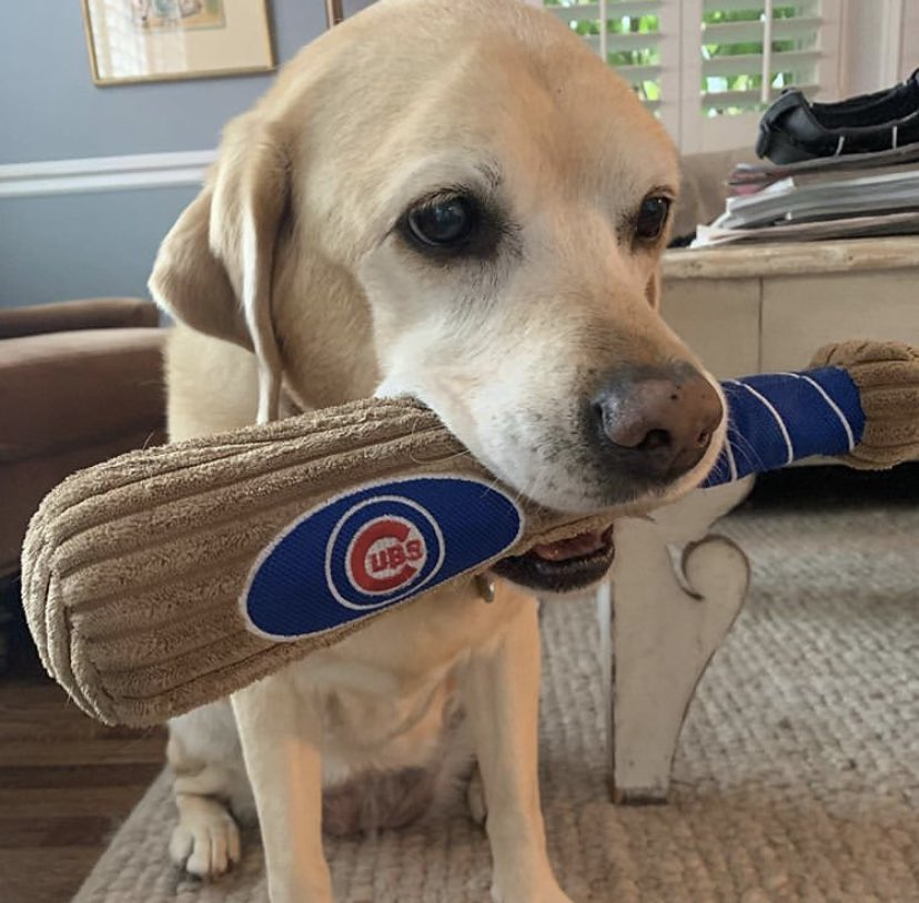 Tess is ready for the @Cubs game!