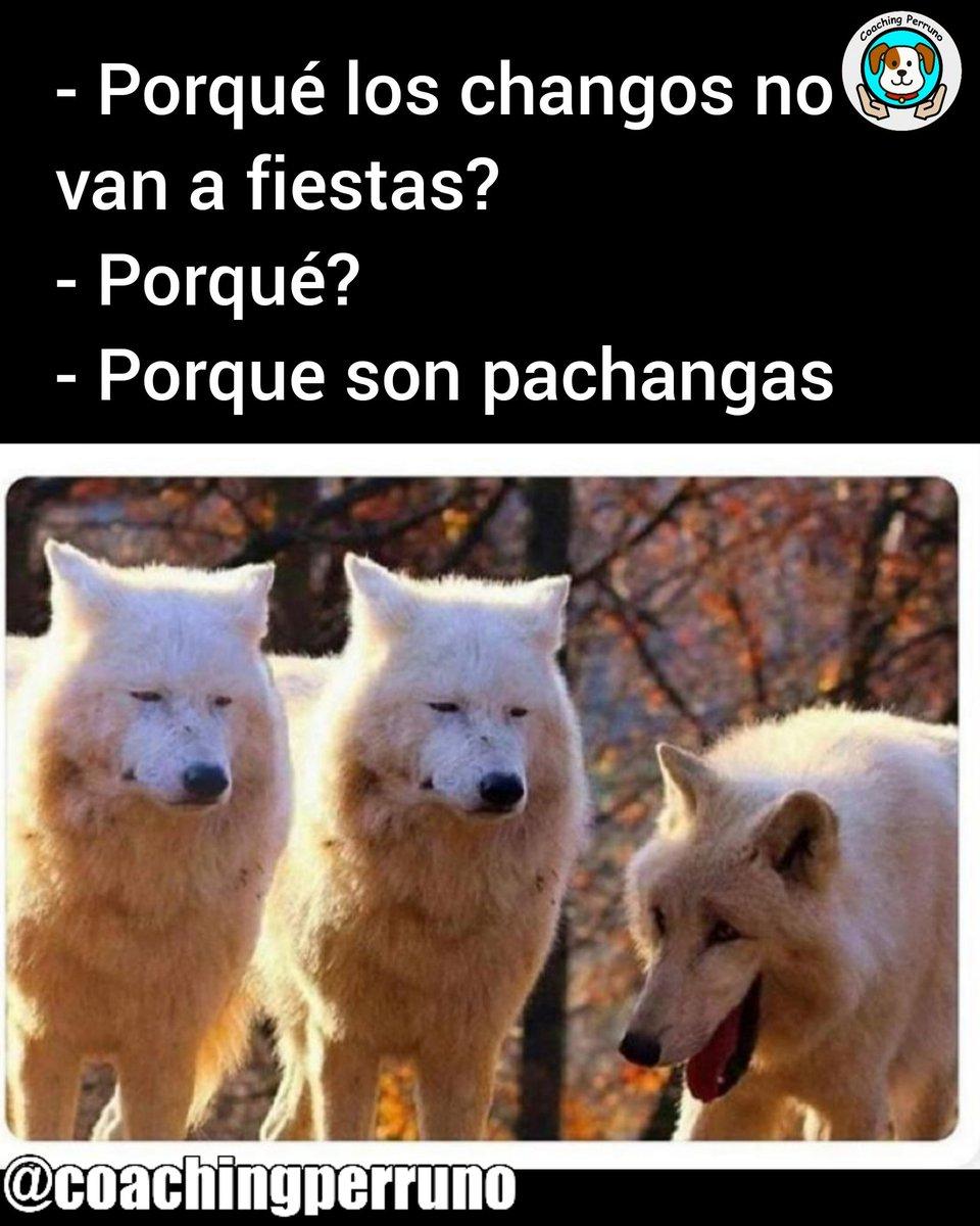 Humor perrón #perros #dogs #mascotas #petsoftheday #petstagram #dogstagram #coachingperruno #funnypets #pets #ilovedogs#petslovers #funnydogs #dogslovers #huskyjokespic.twitter.com/NyJwlACjal