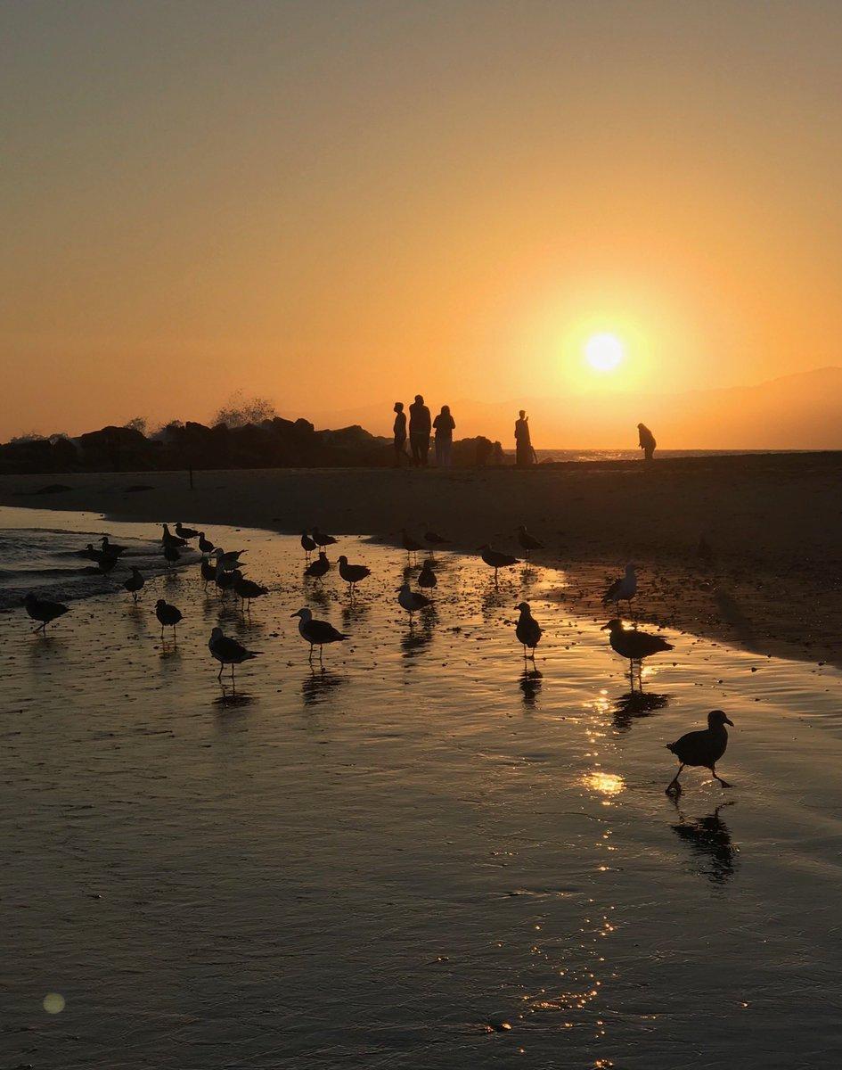 #venicebeach Yesterday's sunset. Photo cred: Alexander Carl, Esq. pic.twitter.com/Tf7MljMnMK