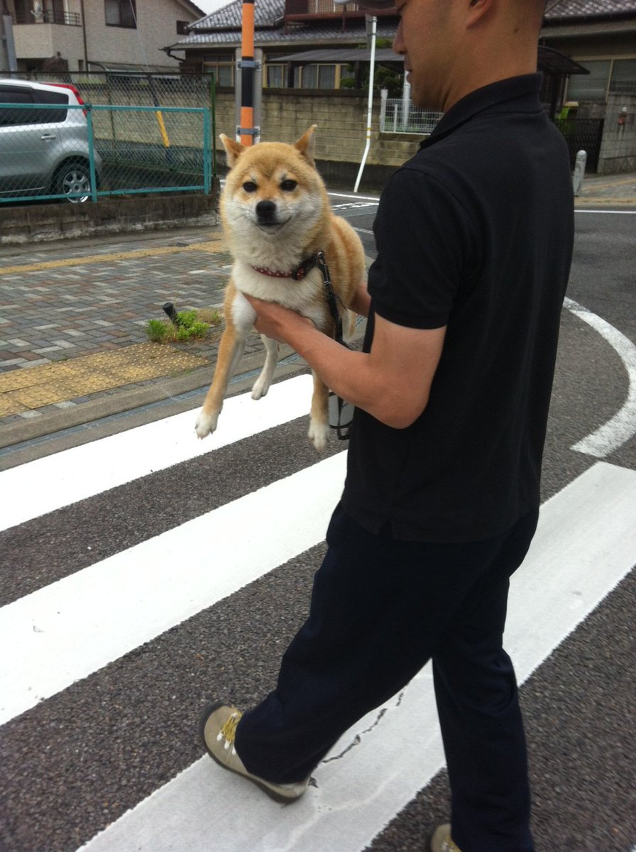 せんちゃんはよく「行かぬ」をするので、こうやって運んであげます。するとだいたいこういう顔になります。最高です。#柴犬せんちゃん