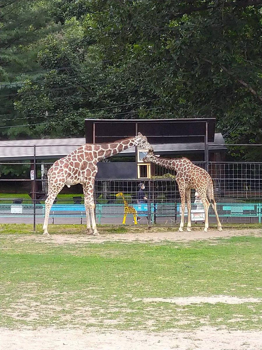 フィーダーその3が出来上がりました!blog(観察しに来てくださいね!#おびひろ動物園 #obihirozoo#キリン #giraffe #メープル #ユルリ#フィーダー #新作