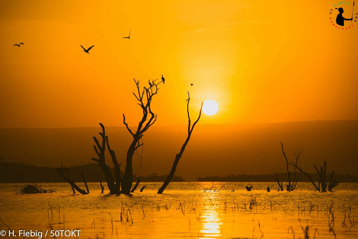 Stunning sunrise at Lake Baringo; a must never miss.. Trust me you should stick around for the sunset #ThisIsMyKenya #TravelWithFriends #Treasurekenya #Tembeakenya #TheMagicAwaits #TravelLocal #DiscoverKenya #LakeBaringopic.twitter.com/XXAIzNGQjH