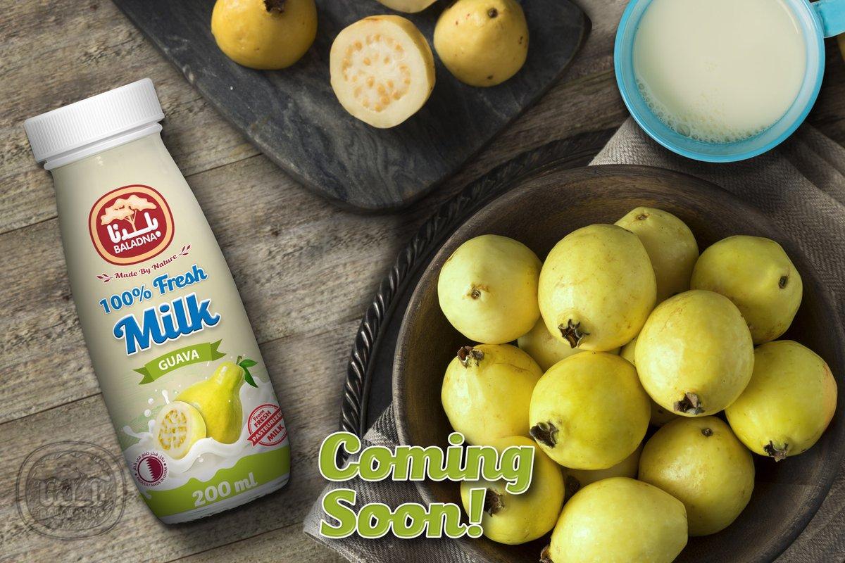 حليب بنكهة الجوافة من بلدنــا قريباً! احصل على انتعاشك بالحليب  نكهة الجوافة ذات الطعم اللذيذ والفريد.  Guava Flavored Milk from Baladna Coming Soon! Get your milk refreshing the Guava delicious and unique flavor.  #Baladna #Qatar #Doha #Guava #Milk #Flavored #بلدنا  #حليب #جوافة https://t.co/0Q8b5Y8mcp