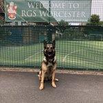 Image for the Tweet beginning: Team 2 Dogs, training @RGSWorcester