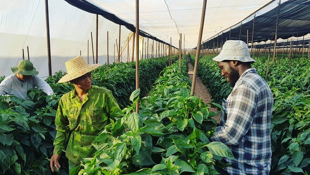 The 11-month training program in #Israel combines both theoretical and practical approaches to help learners develop into innovative #AGRIPRENEURS   Join @IsraelinKenya TOMORROW for #AgriNow2020 to meet their #ideas http://facebook.com/IsraelinKenya/posts/3231920620185154… @OdedJoseph @HamisiWilliams @kilimoKEpic.twitter.com/HxzYbZFCJg