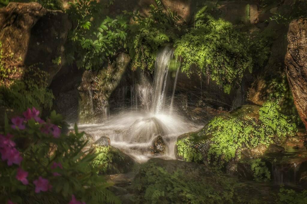 Mt Cootha Botanical Gardens. . . #brisbaneanyday #nikon #thisisqueensland #loveyouqueensland #river #waterfall #rainforest #nature #water #clouds #d5600 #nikonphotography #ig_australia #ig_captures_landscape #mountain #waterfalls #ozshotmag #nikon_dslr_u… https://instagr.am/p/CDdb-KYgzeW/pic.twitter.com/LNCOrWDhD5