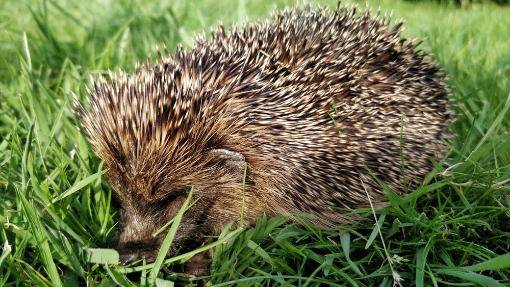 Our @SalfordUni staff and @UoS_Students have committed to making our campus hedgehog friendly, by joining a national campaign designed to safeguard the hedgehog population. Read all about it here: https://beta.salford.ac.uk/news/university-salford-pledges-become-hedgehog-friendly …pic.twitter.com/G5kxva6AZH