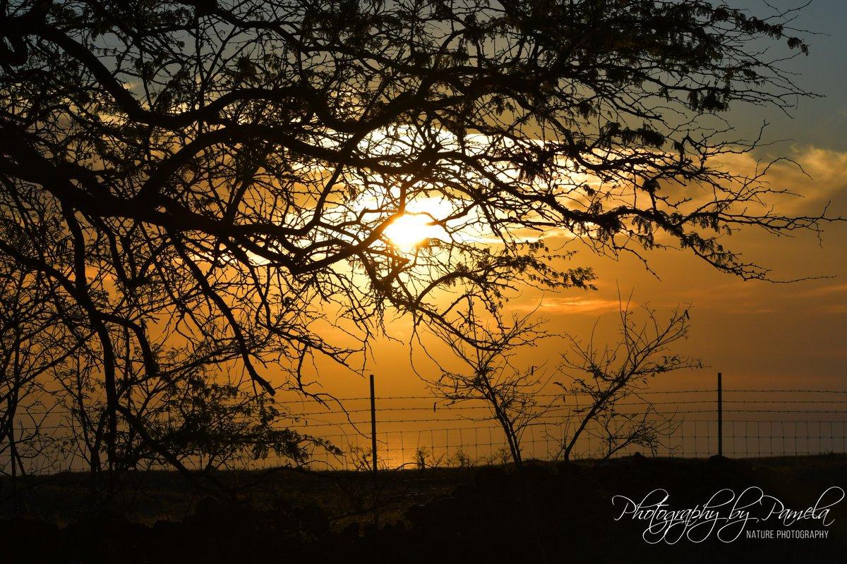 Naturally Orange Sunset #photographybypamela808 #sunset #hawaiiansunset #capturethemoment #landscape #hawaii #endingoftheday.pic.twitter.com/TLGlNUR9hk