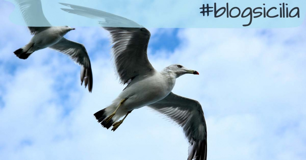 """""""Soltanto quando smetti di guardarti intorno sei pronto a spiccare il volo"""". Edvania Paes  Buonasera da #blogsicilia"""