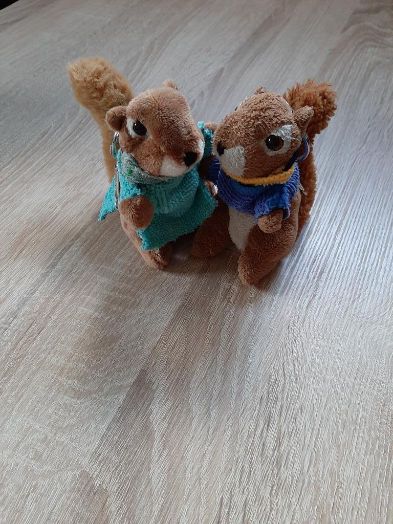 Gestern hat mir Dave seine Freundin vorgestellt - Ora. Der kleine Heimlichtuer hat sie vor 6 Wochen kennengelernt. Willkommen in der Familie, kleine Ora   #Eichhörnchensindschönpic.twitter.com/dDzVJ64IUS