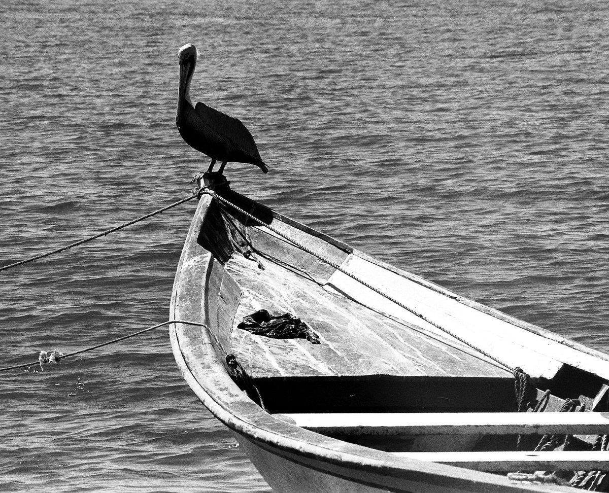 Fotografía analógica de Pedro Antonuccio Sanó. #pampatar #islademargarita #estadonuevaesparta #venezuela 2005 #summer #amazingplaces #lugaresincreibles #paradise #pedroantonucciosanó #fotoantonuccio #photography #photos #photo #foto #caribevenezolano #margarita #photographerpic.twitter.com/ERCd0syqMW