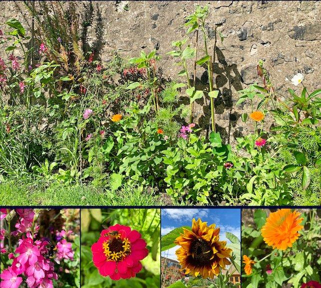New Post | Garden Update, July 2020 https://www.gisforgingers.com/2020/08/garden-update-july-2020.html… #GardenBloggers #GardeningBloggers #LifestyleBloggers #ScottishBloggers #TheGirlGang #fblchatpic.twitter.com/wSBRXwzPwa