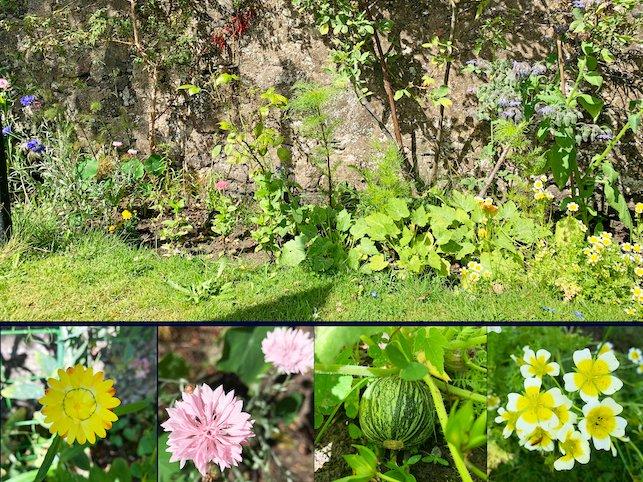 The garden was really flourishing  during July https://www.gisforgingers.com/2020/08/garden-update-july-2020.html… #lbloggers #LifestyleBloggers #BloggingGals #AberdeenBloggers #DundeeBloggers #Blogandbeyondpic.twitter.com/DQIhFsnNDv