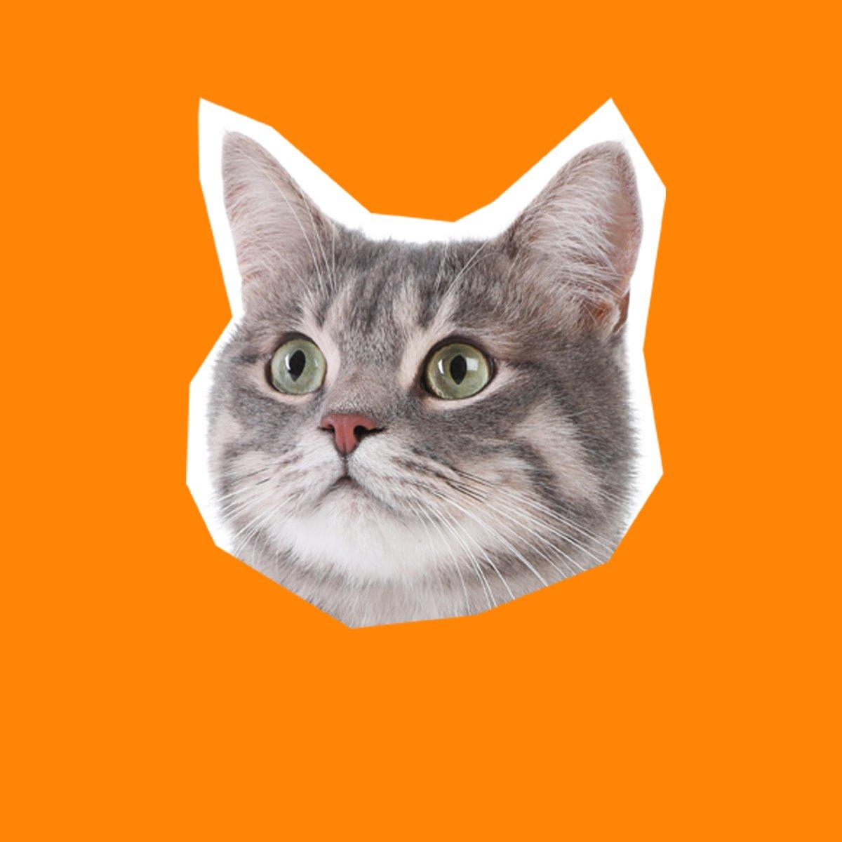 Meow ya doin'? https://t.co/wa5YTTp8OE