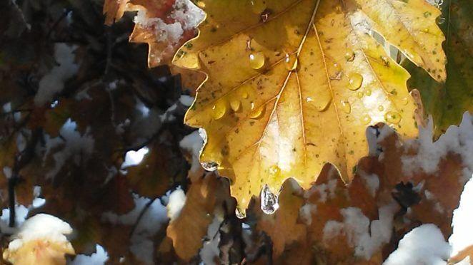 Snow Day - https://t.co/ebzA8I4AVz #Photography #Nature #NatureLovers #NaturePhotos #NaturePhotography #Fall #Autumn #Colorado #Snow #FallSnow #Fotografia #写真撮影 #фотография https://t.co/kDhx9Ac5Pf