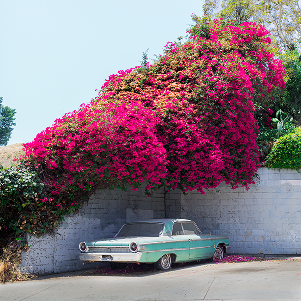 In a Galaxie far, far away: a vintage car + vivid bougainvillea fire up this new @jayzombie photo. More on the blog! https://t.co/8liOuqOOg7 https://t.co/j5N7yoGNoP