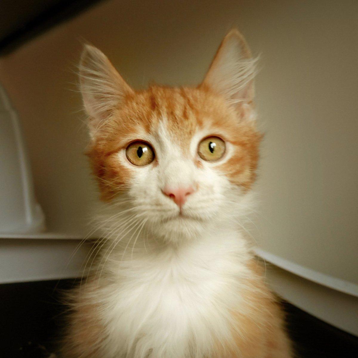 test Twitter Media - 'Dodelijke kattenziekte duikt op in Harderwijk en Ermelo' Wees alert! Zeer besmettelijk voor zowel binnen-, als buitenkatten. Symptonen: diarree, uitdroging, braken, buikpijn, koorts. Geen medicatie mogelijk, alleen preventief middels inenten, zoals Igor! 📷 https://t.co/15S5Bgm3Qc
