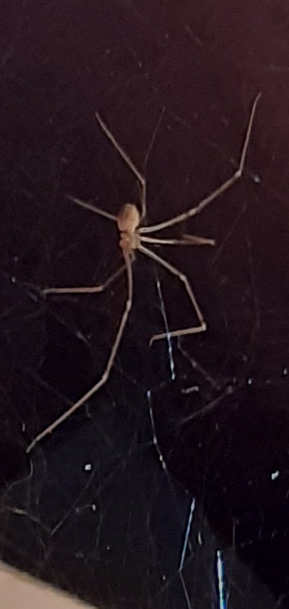 @AnimalPlanet does anyone know  this species of spider and if it's venomous? pic.twitter.com/k3atIn9PmE