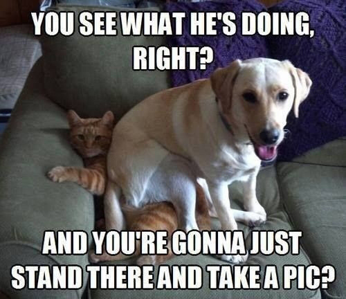 Well yeah... #dog #dogs #cat #cats #catmemes #dogmemes #doglovers #catlovers #petowners #petsofinstagram #dogsofinstagram #catsofinstagrampic.twitter.com/n5VkMFM7Ok