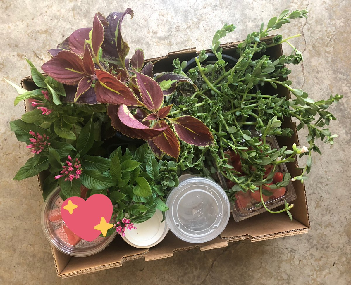 """This box of happiness brought me so much joy today! """"Taste and see that the Lord is good. His love endures forever!"""" https://t.co/VbnWHO7oFB"""