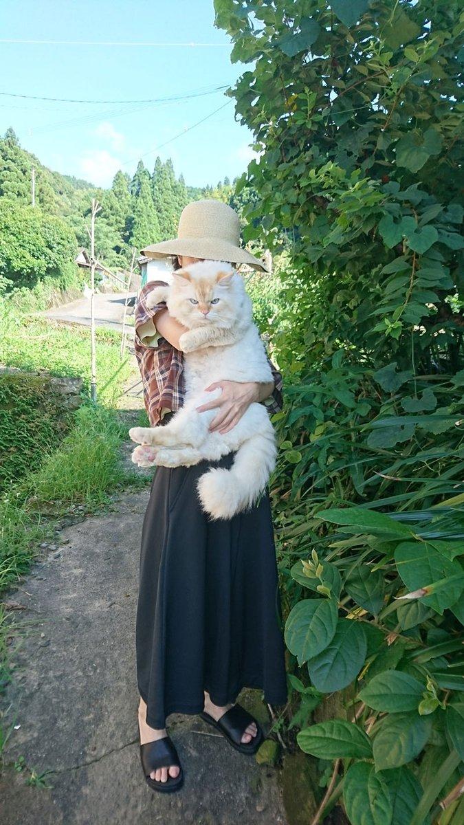 すばらしい「でかすぎて最高な猫」がモッフモフで最高 存在感ばつぐんの巨大猫がかわいい  @itm_nlabzoo
