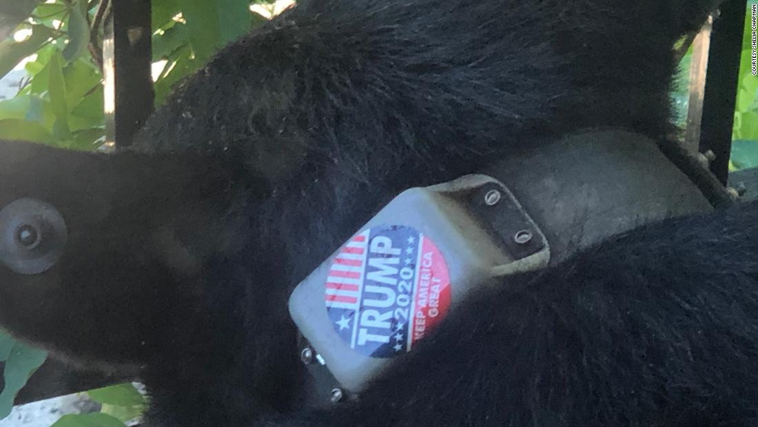 """Animal rights group offers $5,000 reward for information on who put """"Trump 2020"""" sticker on a bear https://t.co/rqobycJHpf https://t.co/5SsvjArxsh"""