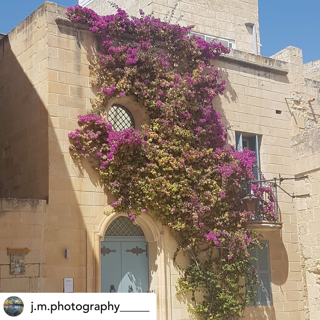 📆4 August 2018 📍Mdina, Malta 📸iPhone 8 #gurushots #malta🇲🇹 #malta #maltaphotography #travel #TravelTuesday #travelling #Malta https://t.co/FikxizzHGY