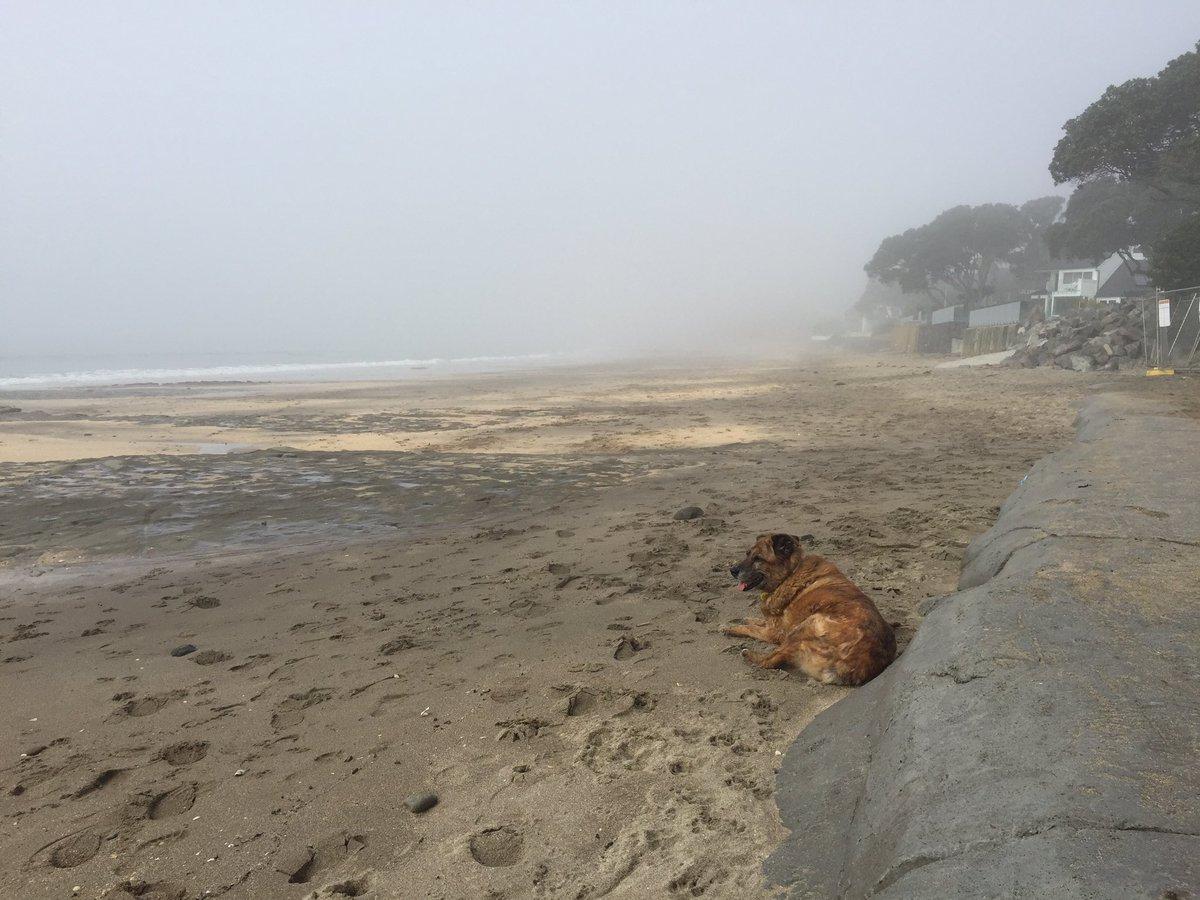 Where is #Rangitoto #fog