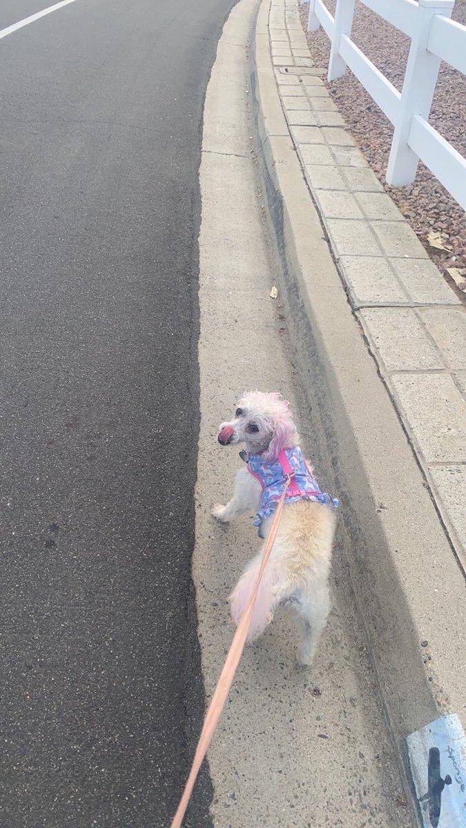 Please ...my friend just sent me this ...i loveeeee dogsssssss pic.twitter.com/XIhRczeDMg