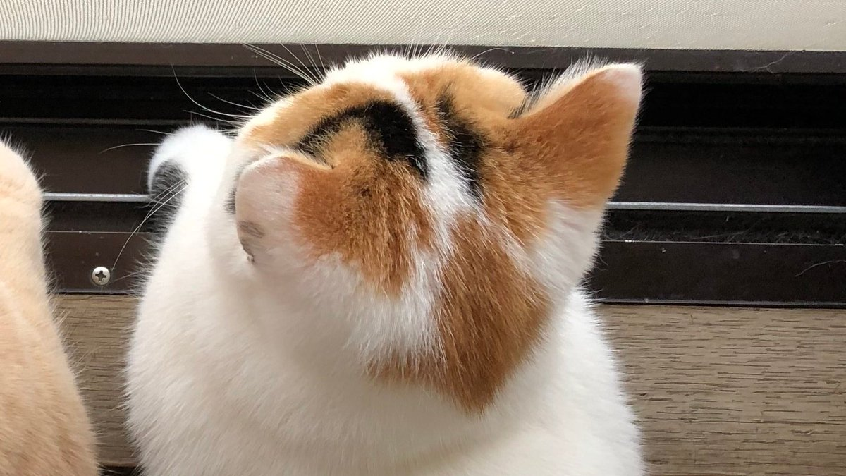 Topics tagged under 貓 on 紀由屋分享坊 EeoFaufVAAER3x2