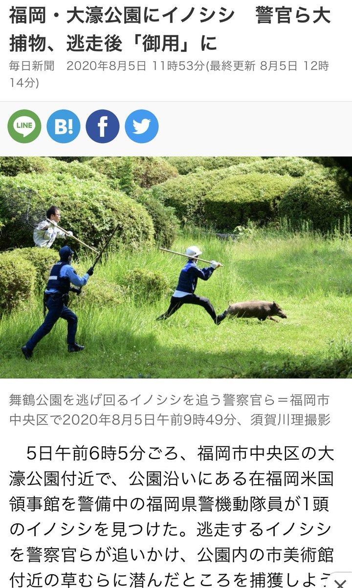 大濠公園にイノシシが出たニュース、警察官が追いかける写真が良すぎて中身が入ってこない