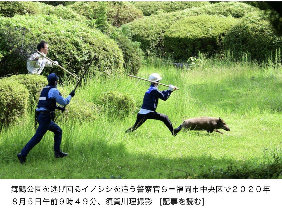 須賀川理さんという方の写真、むちゃくちゃ良くない?新聞でカメラマンさんの名前確認したのはじめてw