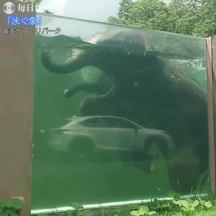 夏だけのお楽しみ 泳ぐ象 富士サファリパーク:静岡オリジナル版は→