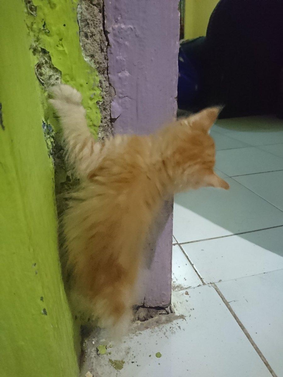 Cari yang mau adopt mereka bertiga, karena ibu ratu dirumah udah gamau nambah kucing :( dom Kota Sukabumi. Maaf fotonya blur, pecicilan anaknya. @FreeAdoptpic.twitter.com/e0W5SU3ziW