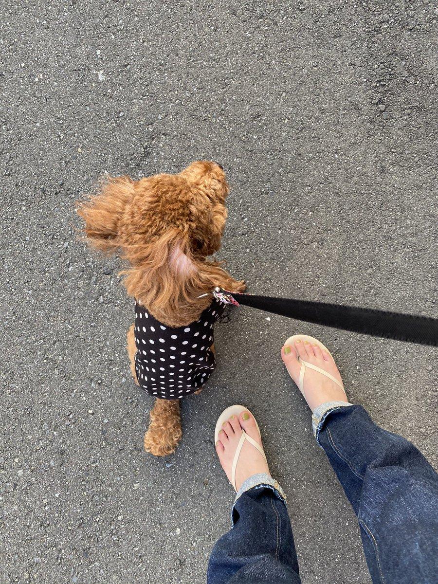 近所のハスキーに会いに行くのが日課の犬がすごく楽しそうな後ろ姿で、わたしも誰かに会いたくなった。毎年届く誕生日おめでとうのメール、今年も届いた。海を越えてルーマニアへ、落ち着いたら最初に行きたいなぁ✈️