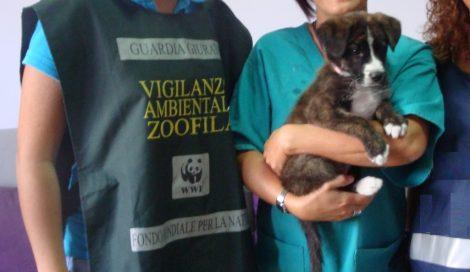 Coppia litiga e abbandona il cane sul balcone, il cucciolo muore di stenti - https://t.co/AJb5dmHYs8 #blogsicilianotizie