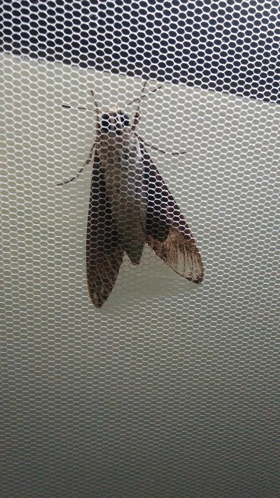 My Aunt died the next day after I saw this huge moth in our room. #premonition https://t.co/hEYqS2XZxQ