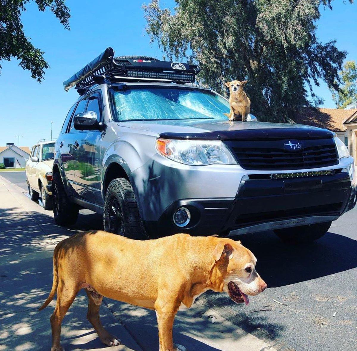 Wednesdays are for the pups  : @slo_foz   #Subaru #Subie #subieflow #subienation #subilove #HTX #houston #houstontx #texas #carsales #cars #carsforsale #autosales #car #cardealership #subaruambassadorspic.twitter.com/bYyVSgVUs8
