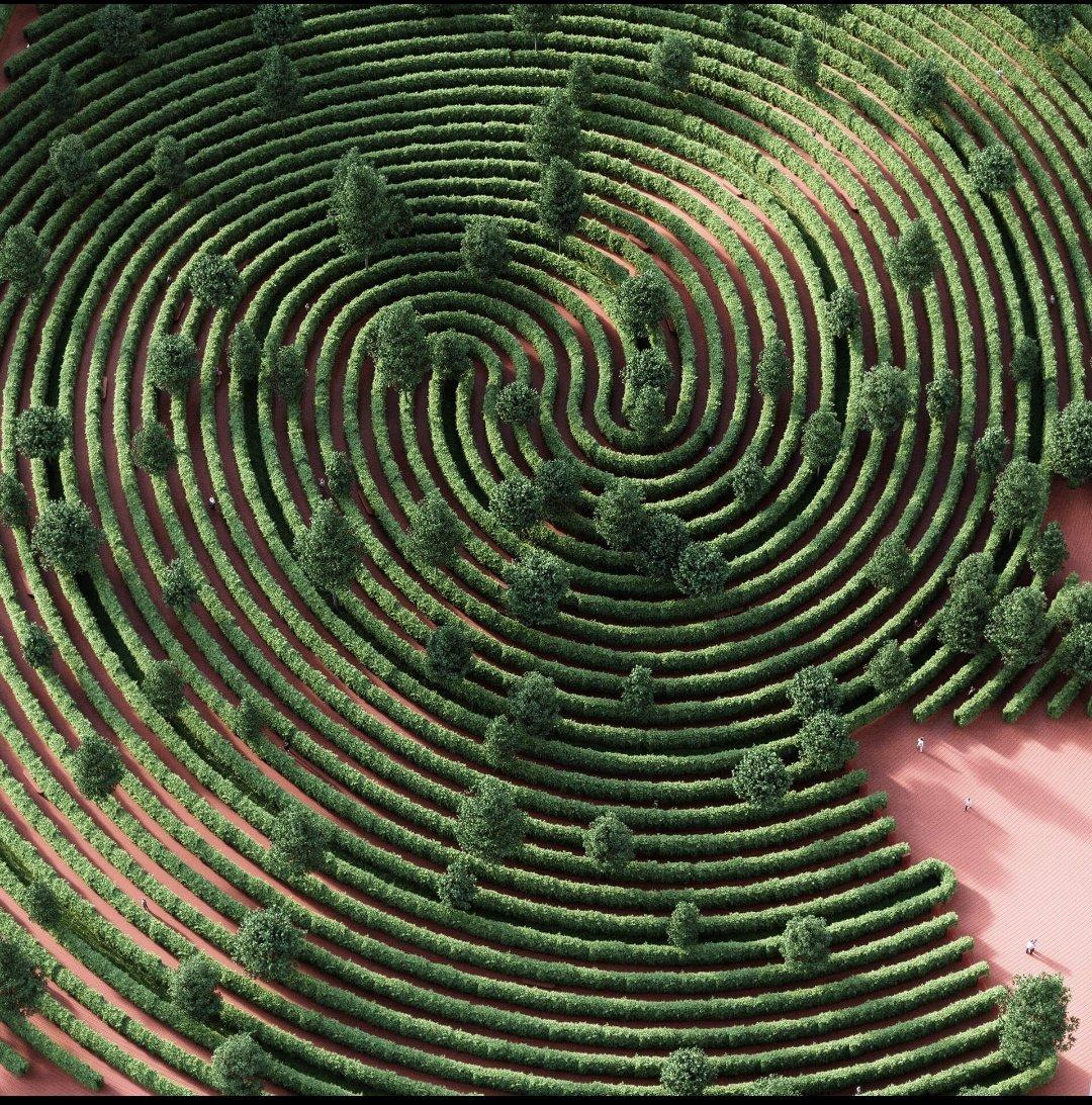 Finger Print maze Park #architecture #NaturePhotography