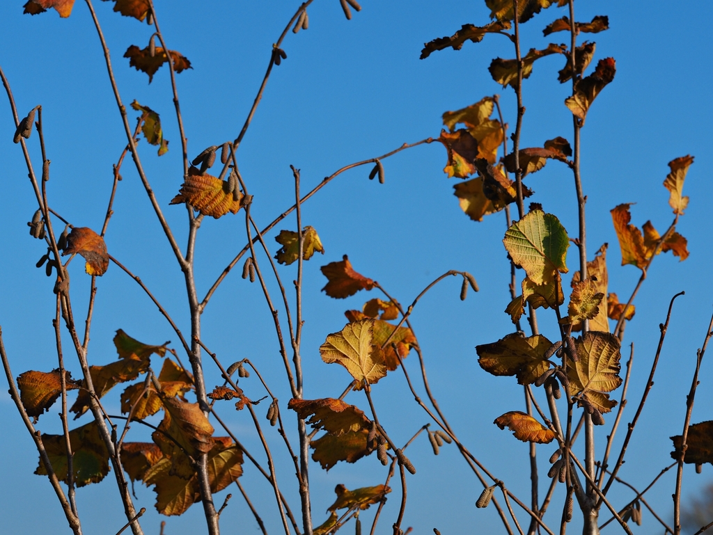 Last few leaves on a young beech treehttps://thoughtsofdawn.com/downloads/last-few-beech-leaves/… #photography #nature #treepic.twitter.com/fTLY1d4po8