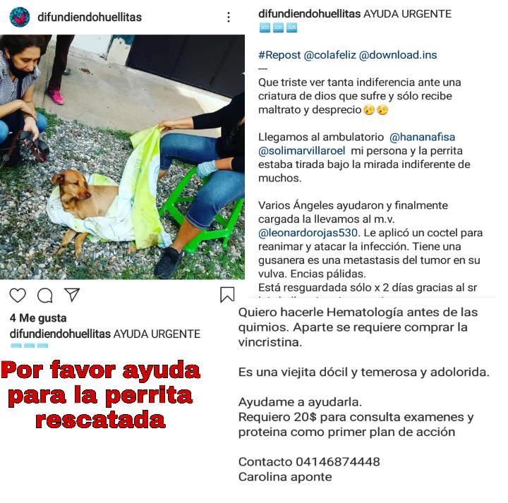 #ayudarnoshacebien #AdoptaNoCompres @COLAFELIZ hizo rescate Pide ayuda para auxiliar a  aquí puedes leer #Caso Ayuda como puedas! Nada es poco. Rtdifunde @Tequila_Club @mallela4848 @sayue1928 @manto1967 @brujita_pueblo @carolencasa @luzmilalaya @prinzzestter @Tango3OOpic.twitter.com/tygs7sXzjS