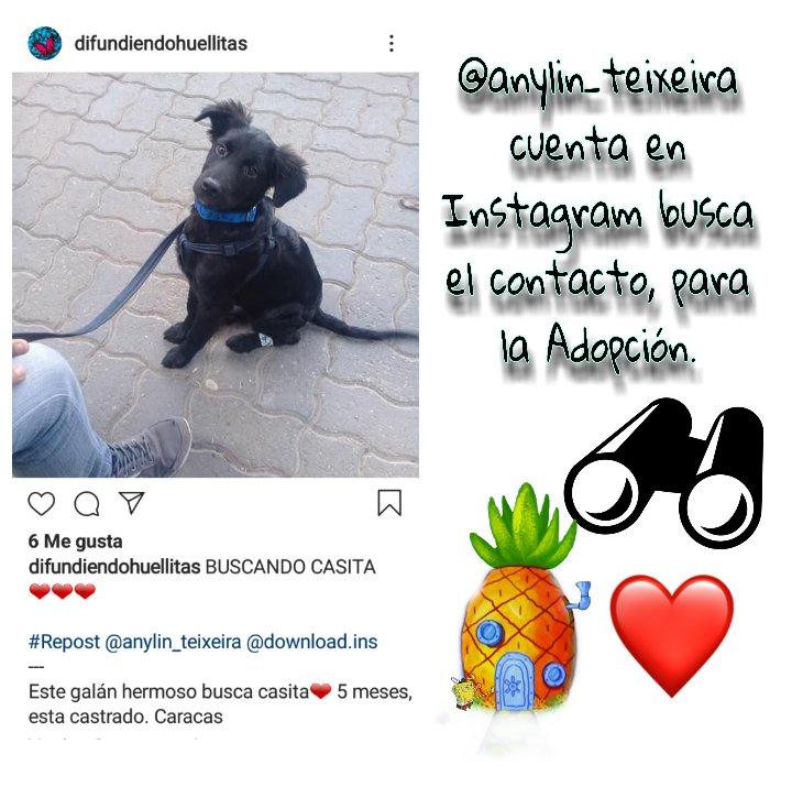 #ayudarnoshacebien #AdoptaNoCompres #Caracas  Perrito #AdopciónResponsable Si puedes Por favor Leer Rtdifunde @kelisil @yelitzarg @sierralima_1 @gaspy19 @Gerardo96958547 @tostonsito1 @nani_gin @Gitanicros @Gimaroha @Gisela51228197 @yudith_66 @eloisalara89 @manto1967pic.twitter.com/3RVqlq19wk