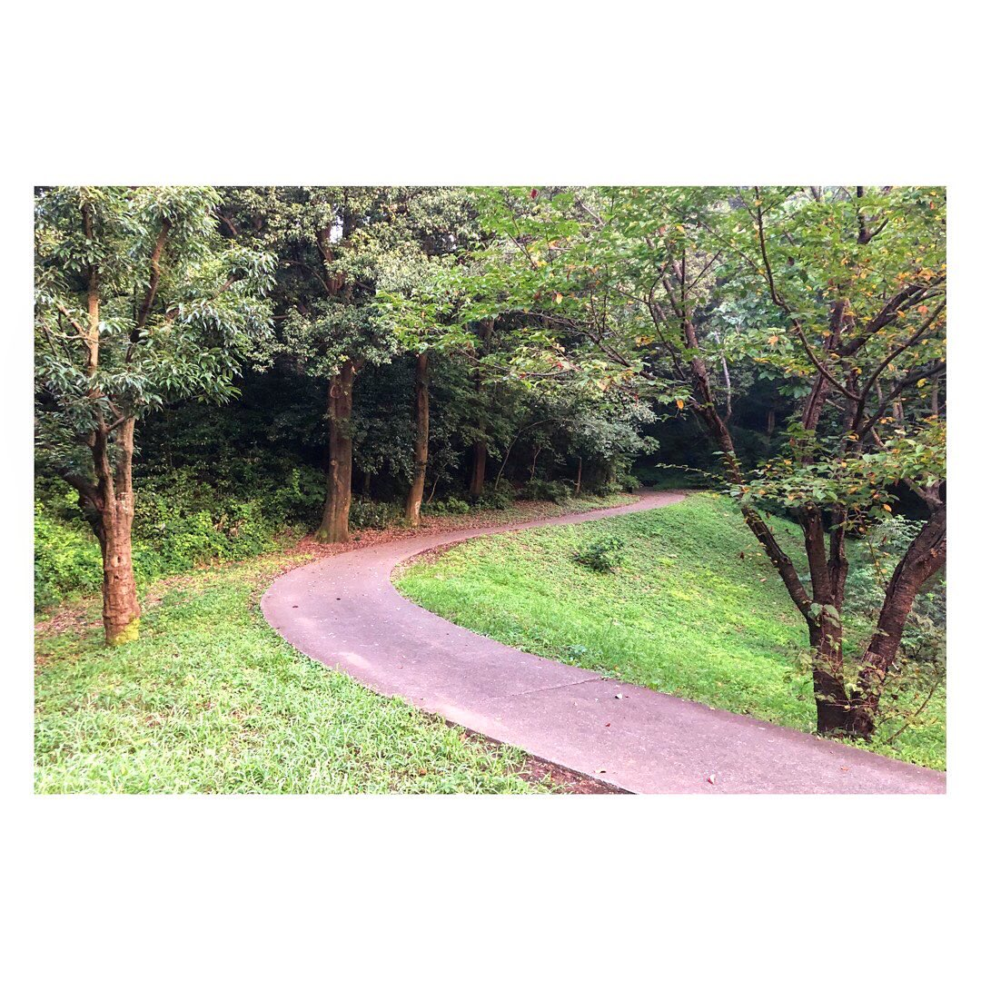 morning run. 今朝はゆっくり5km走って1日のスタート。相棒はCloudflow #onrunning #OnFriens #running #ランニング #多摩丘陵 #東京多摩ライフ #身近な自然 https://t.co/J1OWt6j0ow